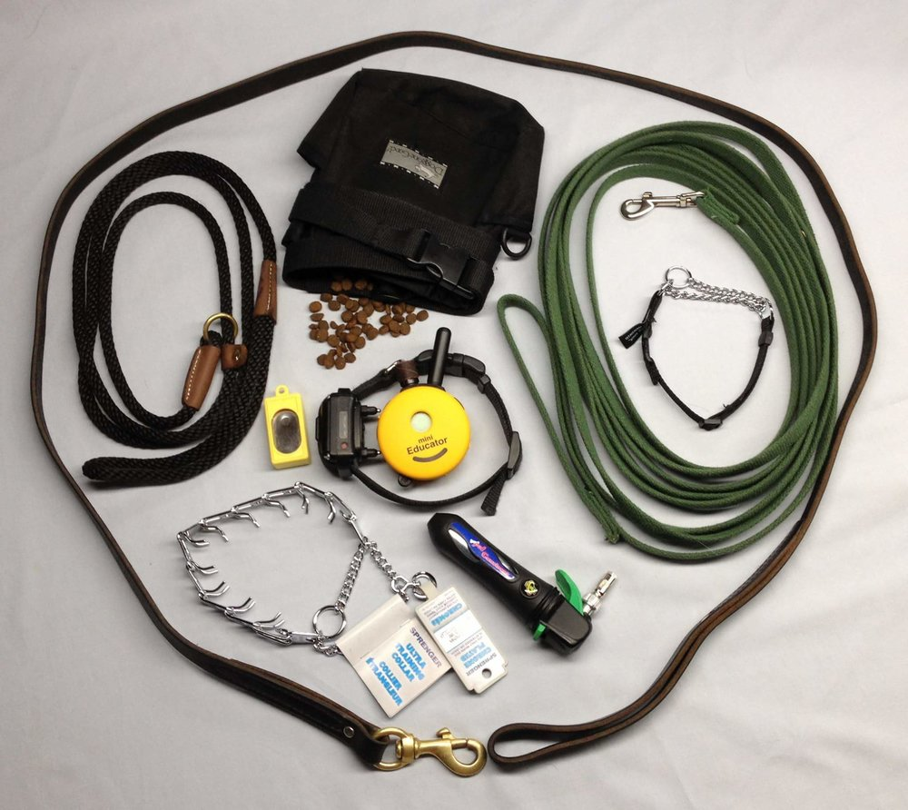 E-collar_prong collar_pinch collar_clicker training_off leash training_balanced dog training_Springville Utah
