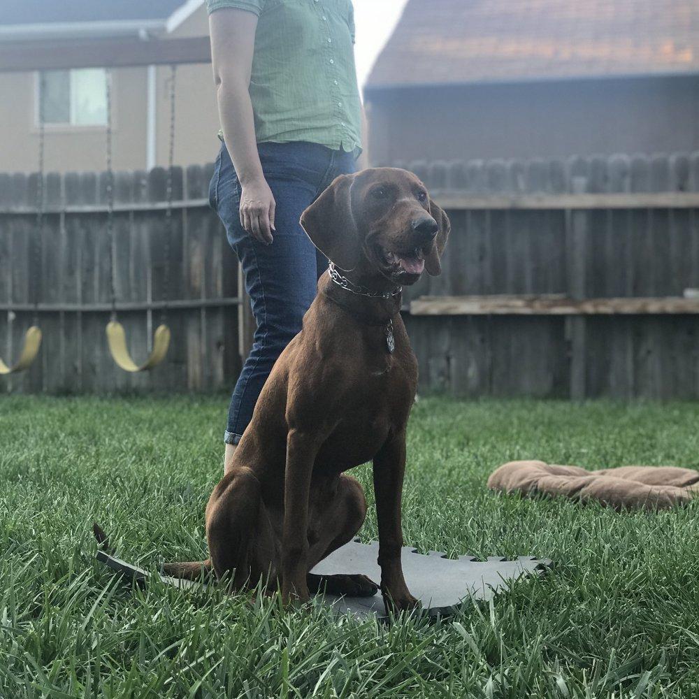 Redbone Hound_Puppy Training_Group Class