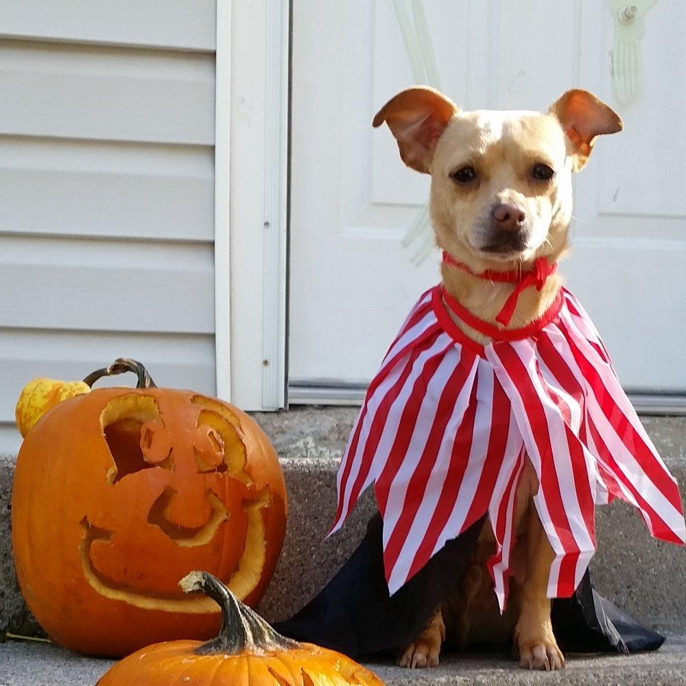 Happy-Halloween_dog.jpg