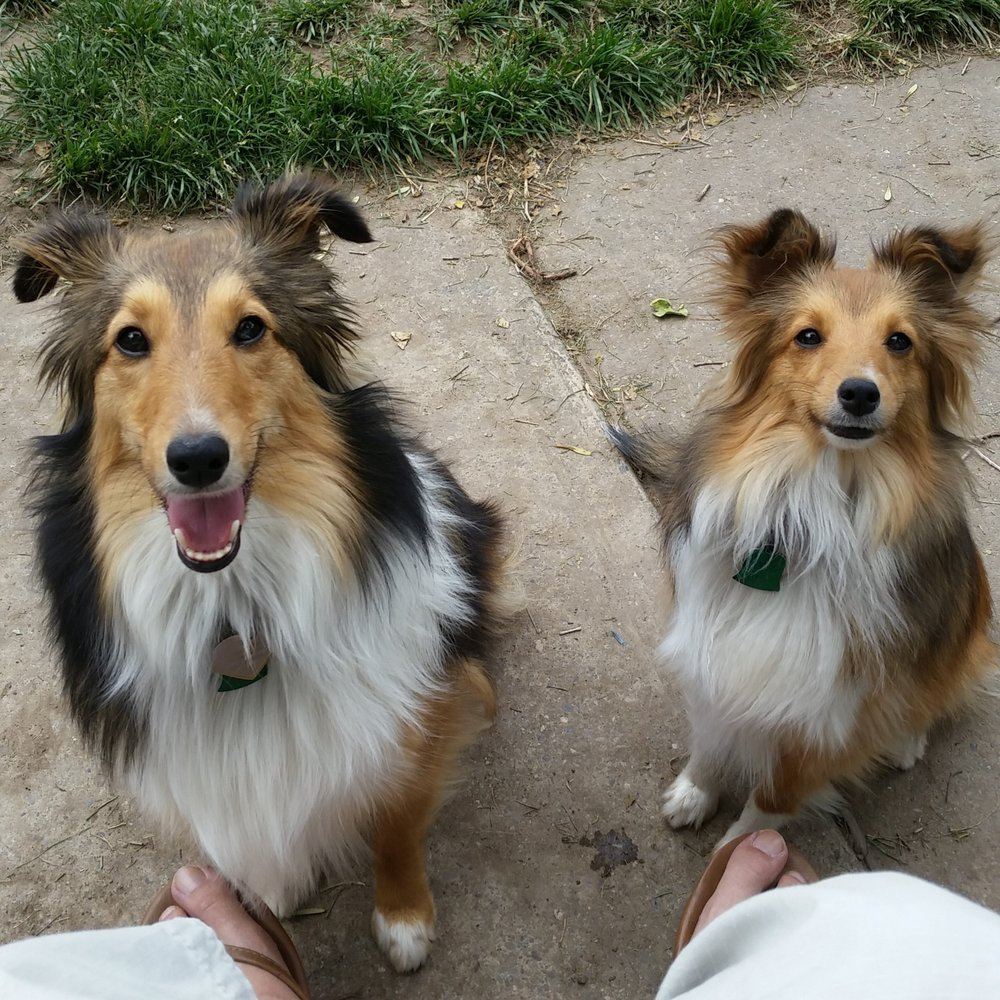 Corgi & Tiny attended Day Camp regularly until they moved and found a new home in Salt Lake.