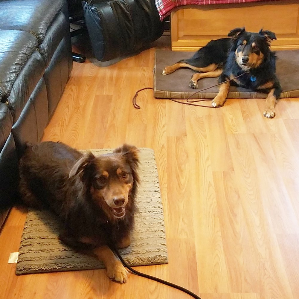 Arrow & Copper met for an evaluation and enrolled in Boarding School.