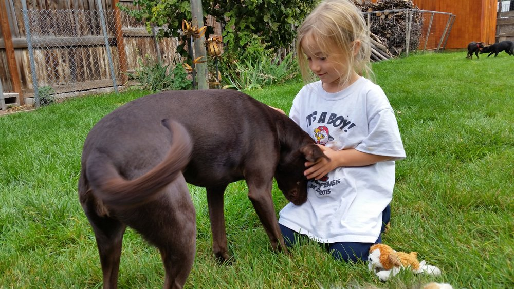 How to appropriately say hi to a dog | Dog Ownership 101 | Bakers Acres K9 Academy Blog