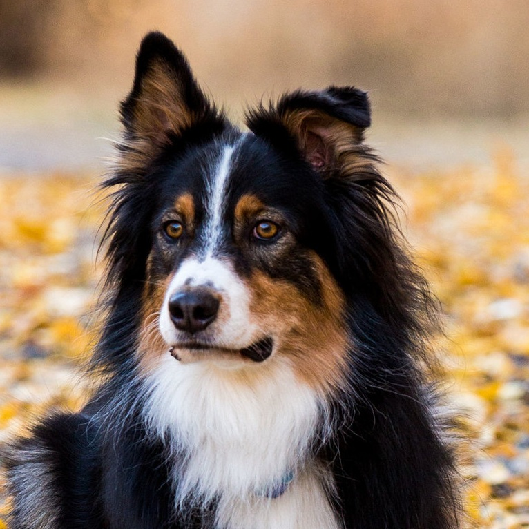 Dog training for any breed and any age | Bakers Acres K9 Academy