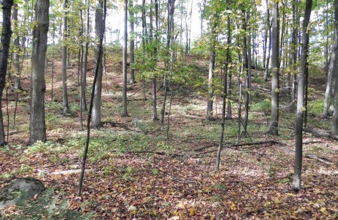 S+Nanagosa+Trail+1.475+Acres+suttons+bay+leelanau+county+for+saleby+Oltersdorf+Realty+1.JPG