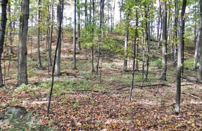 S Nanagosa Trail, Vacant Suttons Bay parcel for sale by Oltersdorf Realty LLC (1).JPG