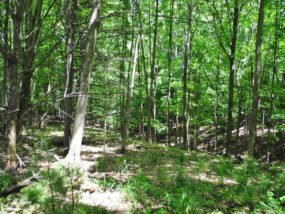 Parcel A, N Vincer Way, Northport, Leelanau County - Vacant Land for Sale by Oltersdorf Realty LLC (3).JPG
