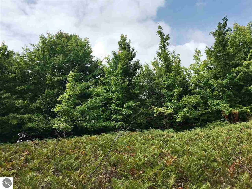 68 S Bay View Trail, Suttons Bay Water View Lot Sold by Oltersdorf Realty LLC (2).JPG