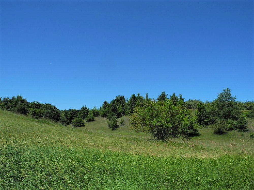 40 Acres for sale by Oltersdorf Realty LLC, Leelanau County Realtors - S Popp Road, Lake Leelanau (6).JPG