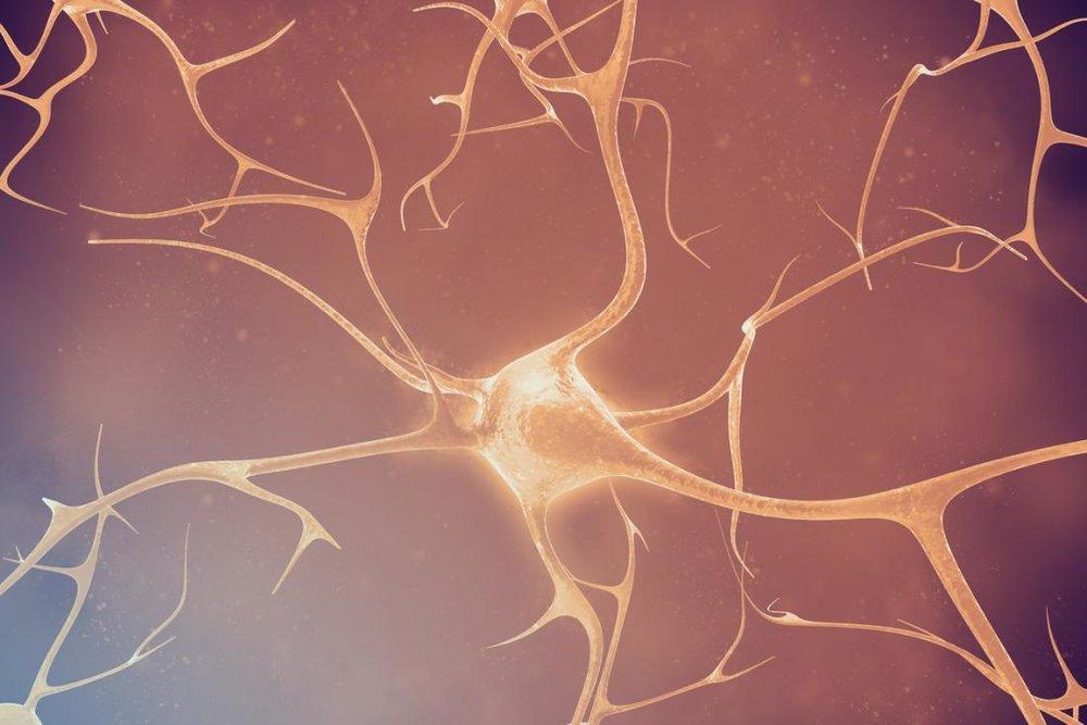 neuron-network-dysmyelinating-diseases.jpg