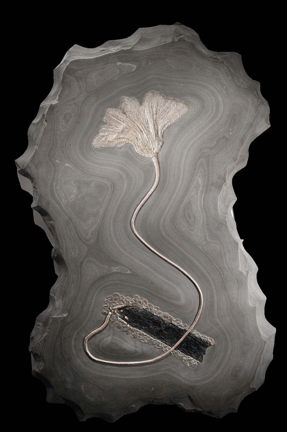 Crinoid from Germany