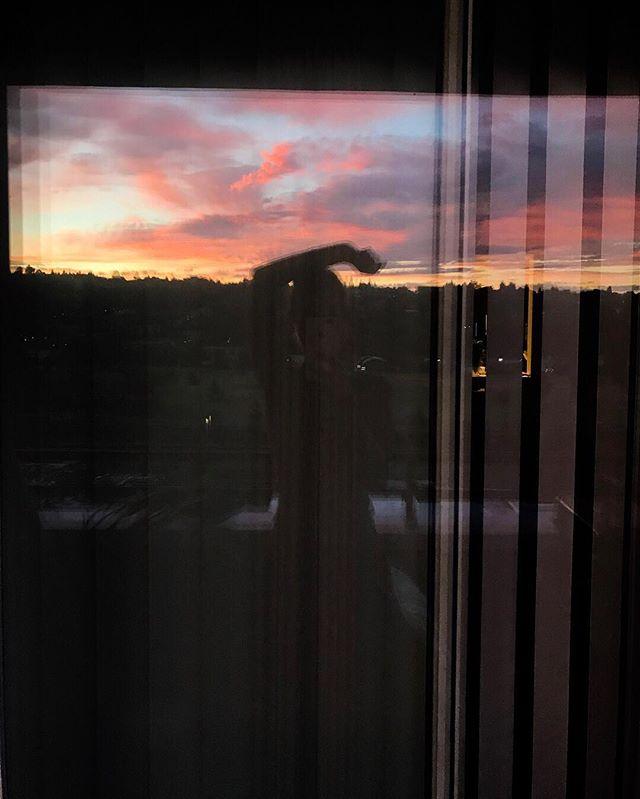 sunset photobomber ✨