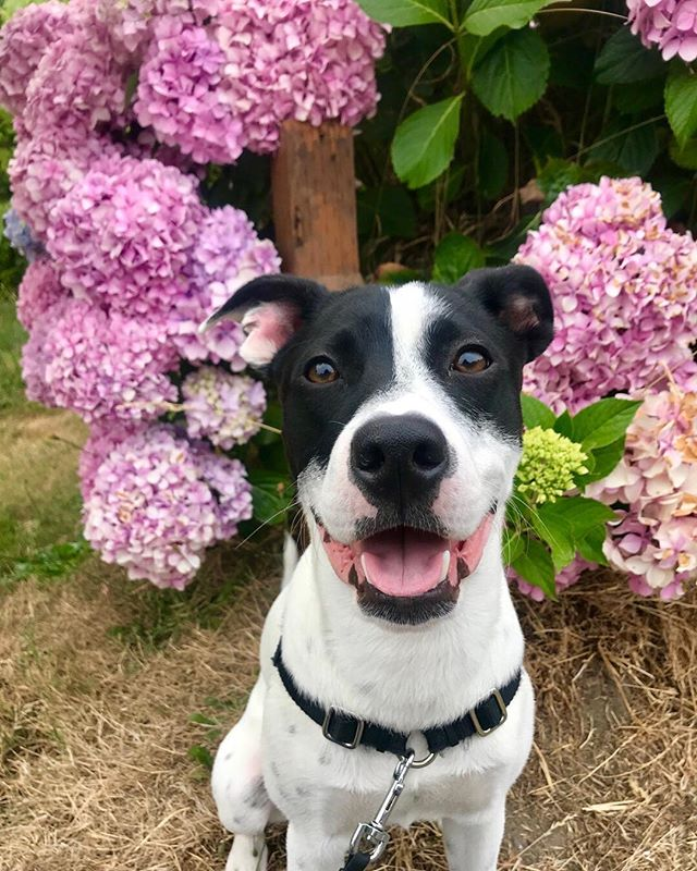 my aesthetic in two words: Ollie and flowers 🌸