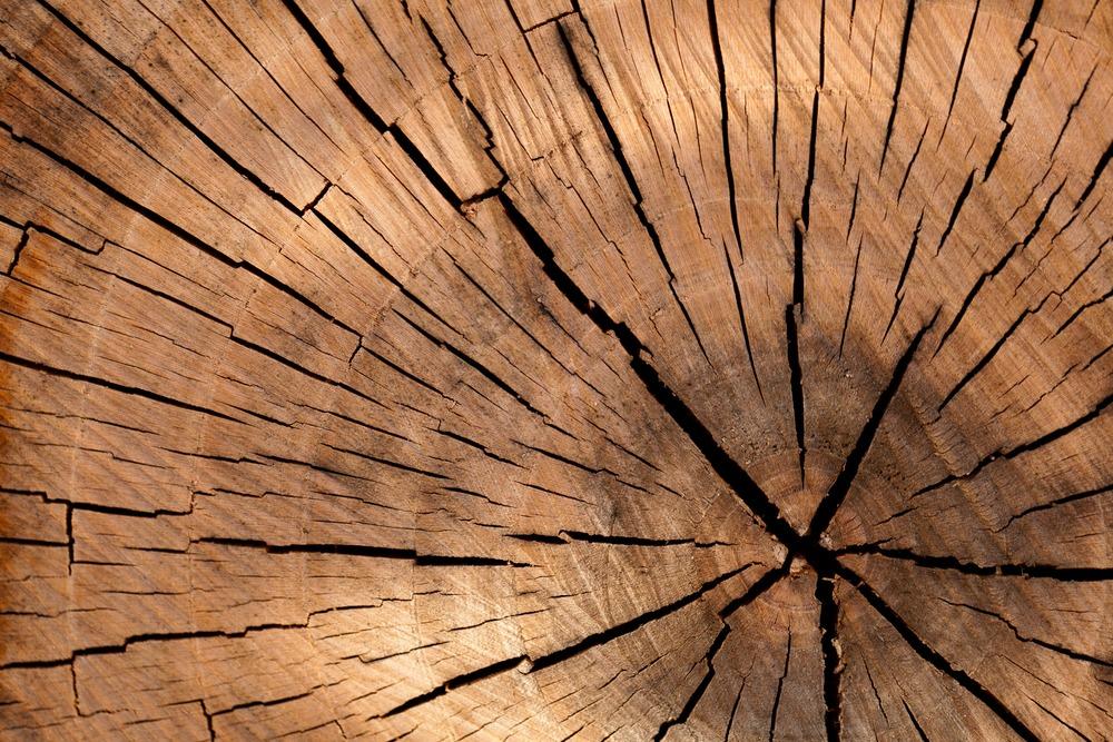 stump-grinding.jpg