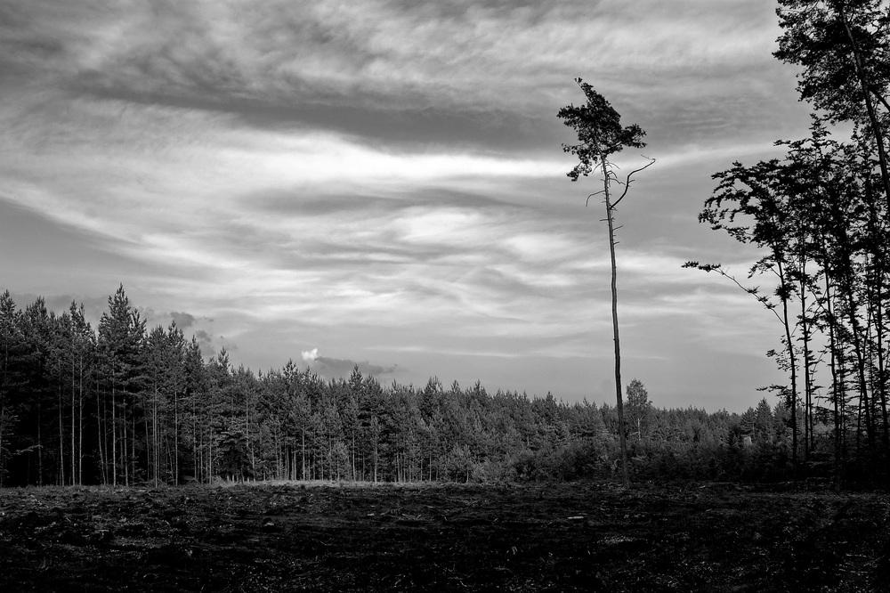 Tree Felling.jpg