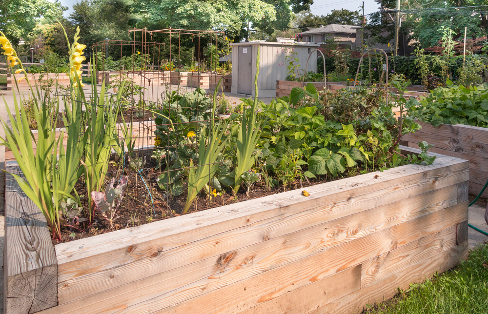 Raised Beds are a perfect solution for urban farming.