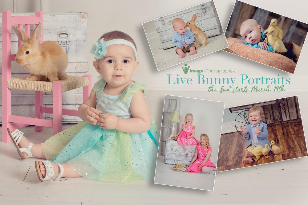 Bunny Cover.jpg