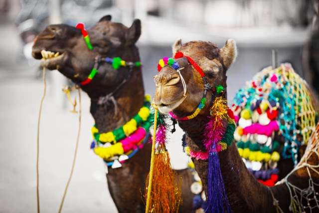 Camel Fair - Indian Travel Inspiration
