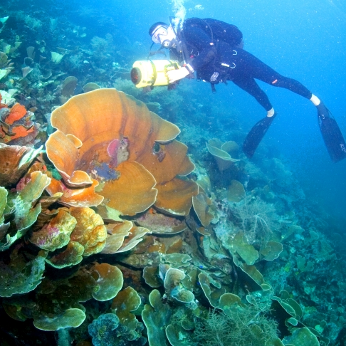 Indonesia Diving and snorkelling Indonesia Travel Inspiration