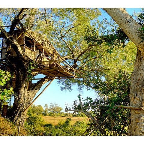 Tumbling out of the Angola Highlands two rivers converge to form the Okavango Delta. Stay at the Delta Camp, on a small island in the heart of the  Okavango. Climb to their tree house which is well elevated to command the spectacular vista of swamp and riverine forest that lies before it.  @deltacampbotswana #africatravelexperts #africatravel #theindependenttraveller #independenttraveller #travelideas #travel #travelexperts