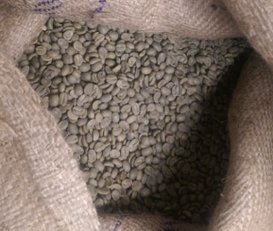 green coffee beans, unprocessed coffee