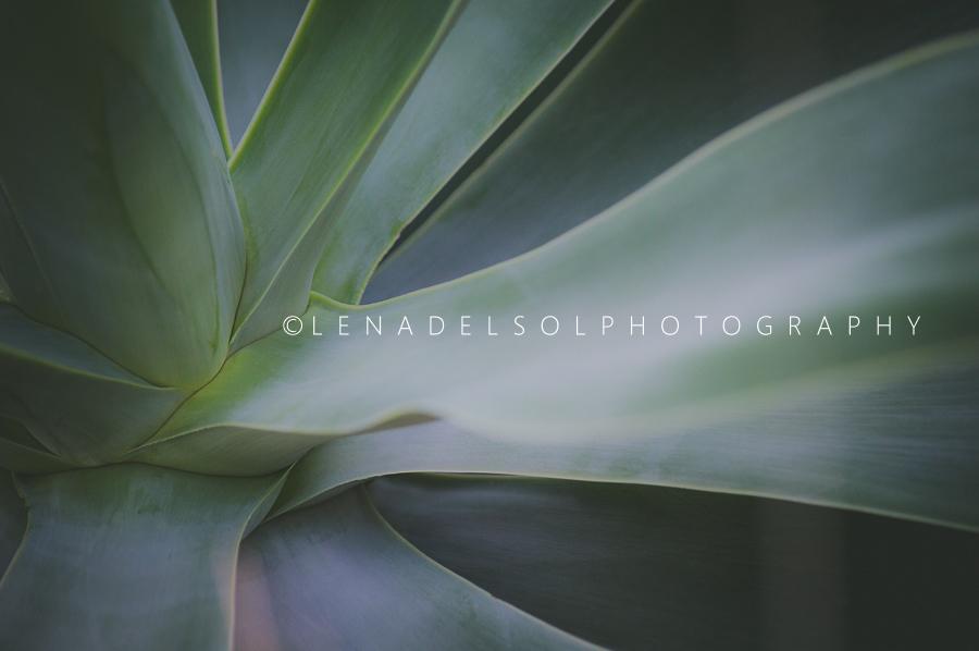 botanicals edited-98-19.jpg