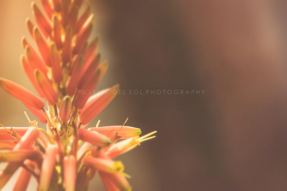 Botanicals-10.jpg