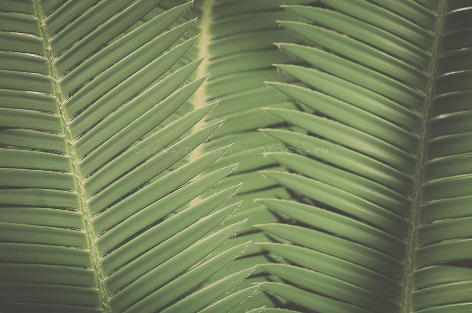 Botanicals-10-2.jpg