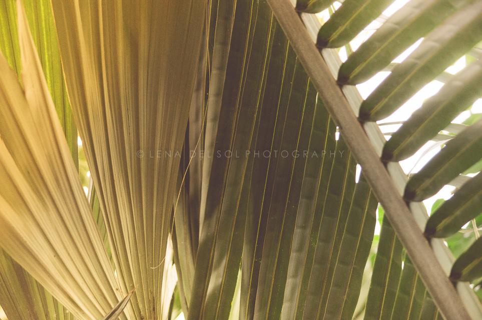 Botanicals-10-17.jpg