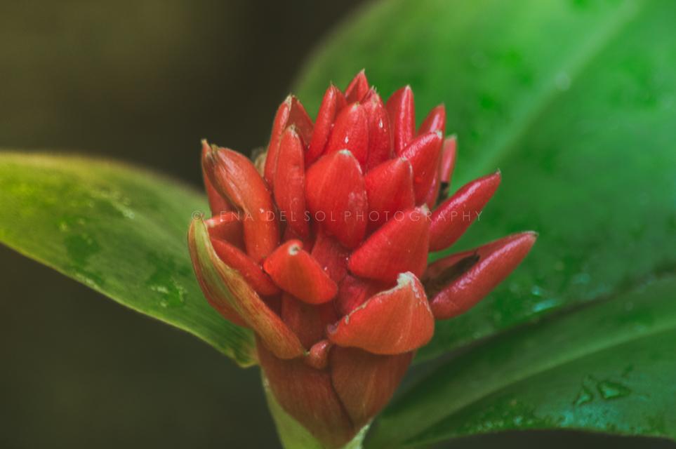 Botanicals-10-19.jpg