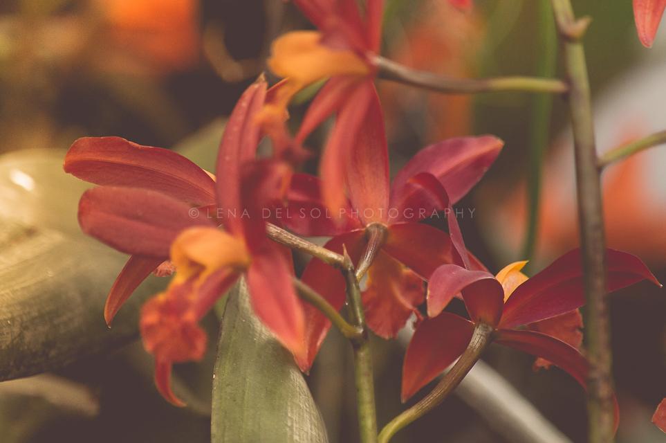 Botanicals-10-31.jpg