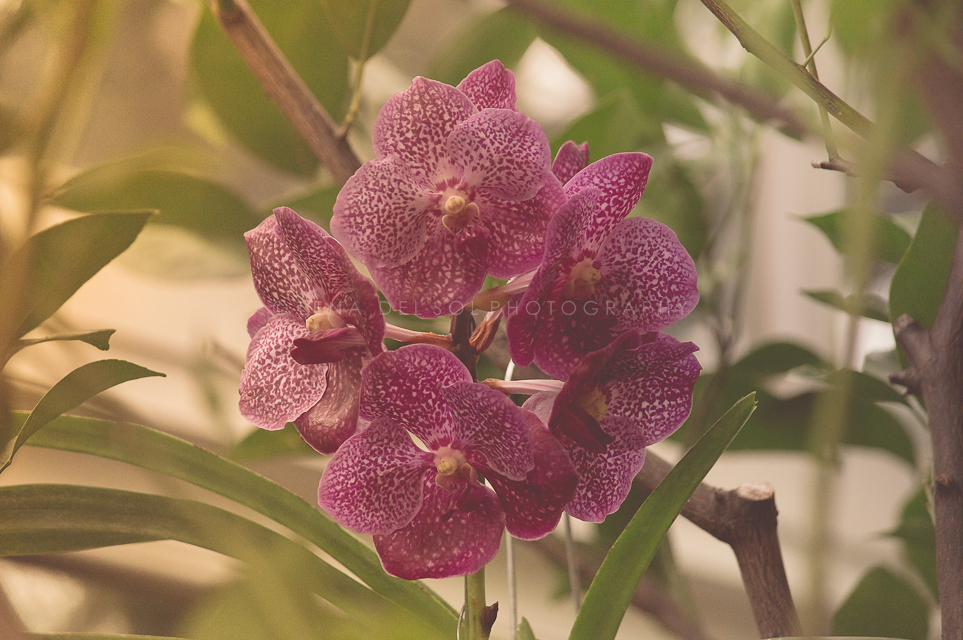 Botanicals-10-32.jpg
