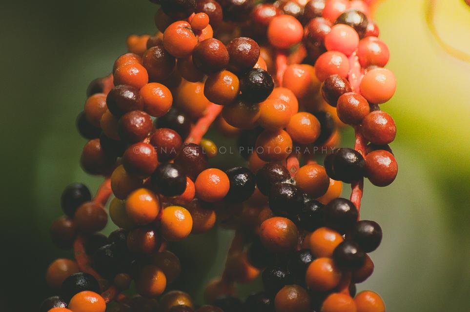 Botanicals-10-33.jpg