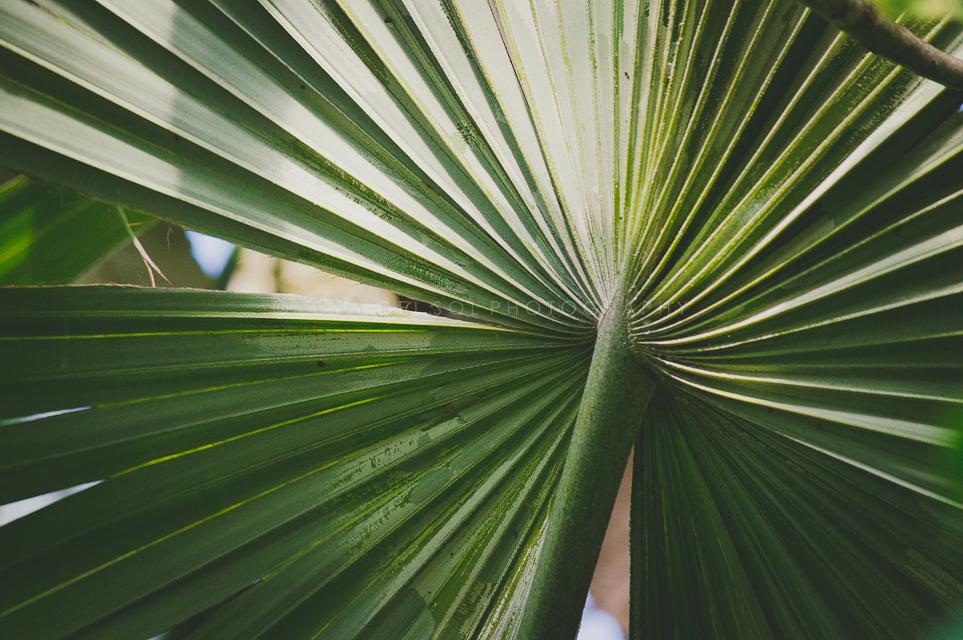 Botanicals-10-34.jpg