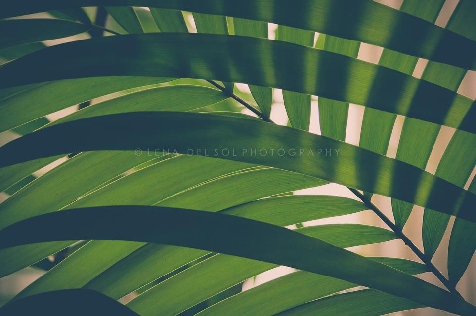 Botanicals-10-40.jpg
