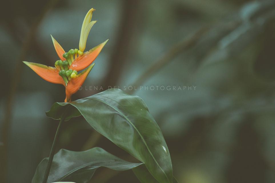 Botanicals-10-42.jpg