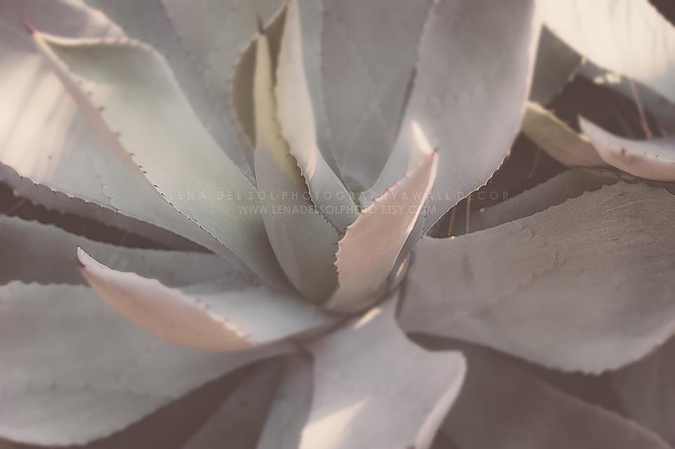 Botanicals-10-44.jpg