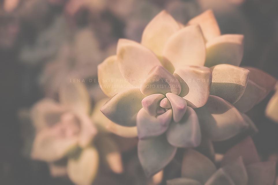 Botanicals-10-45.jpg