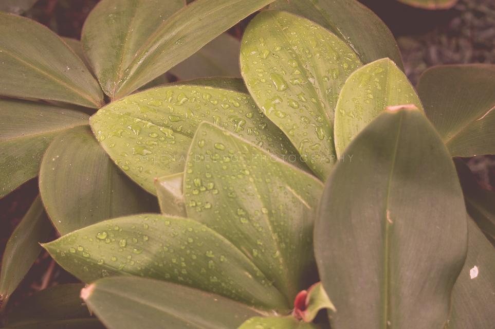 Botanicals-10-13.jpg
