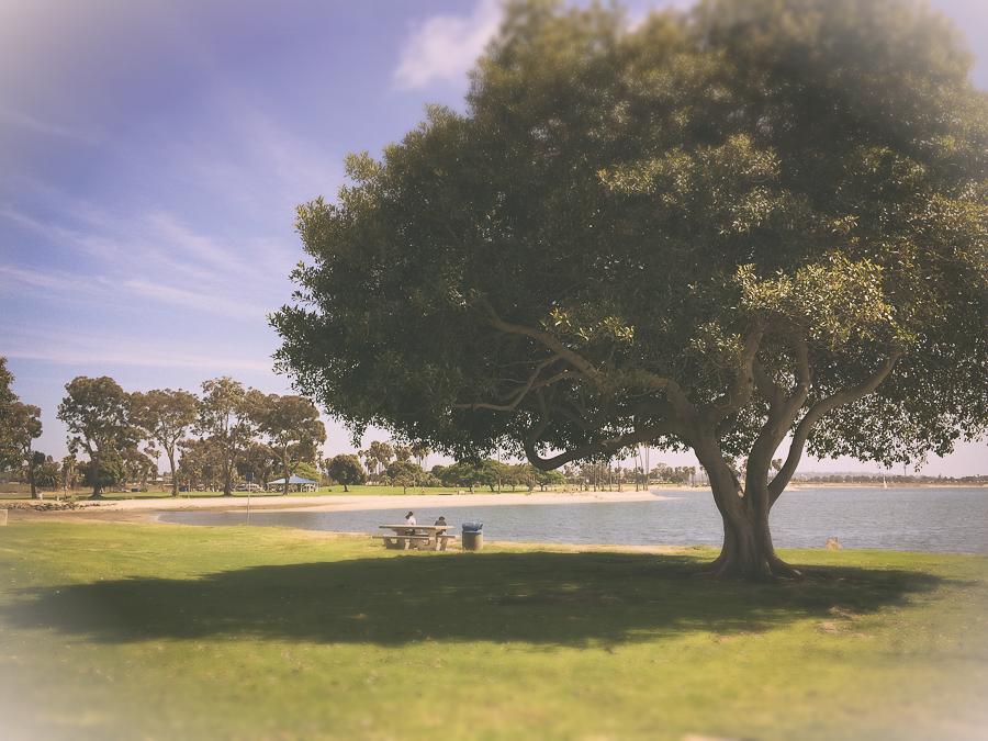 38-98_tree.jpg