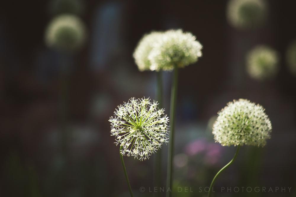 Lena-del-Sol-Photography_nature-1.jpg