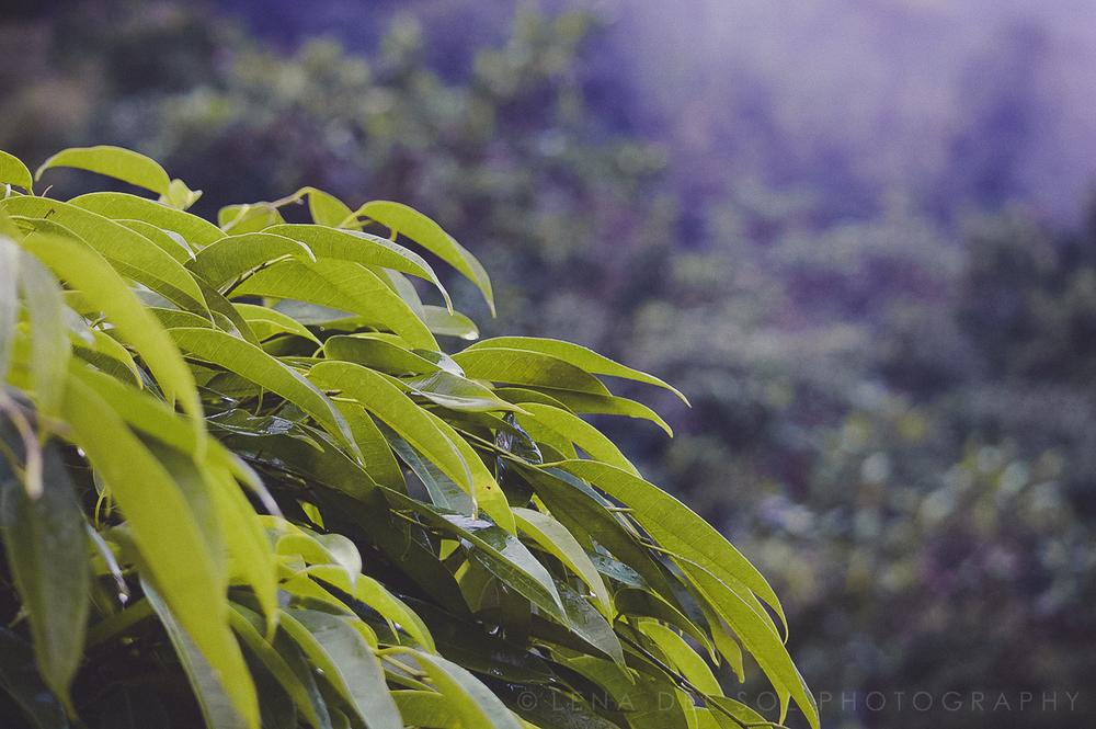Lena del Sol Photography_PR-1-7.jpg