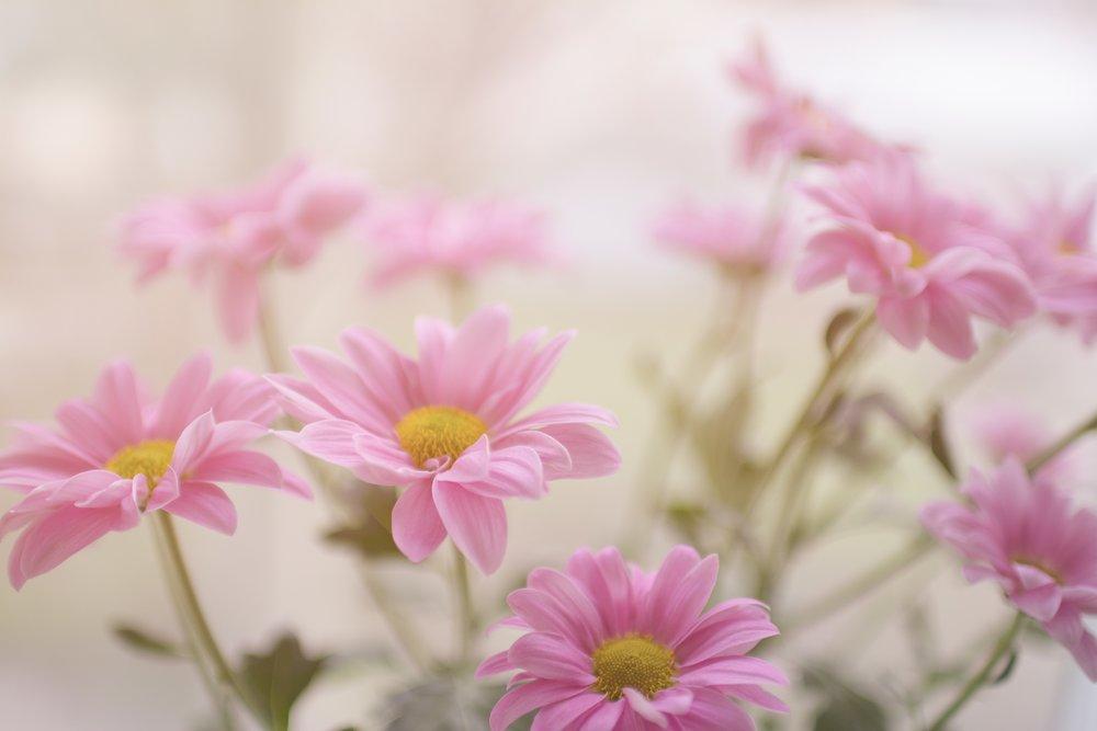 garden girl gang -