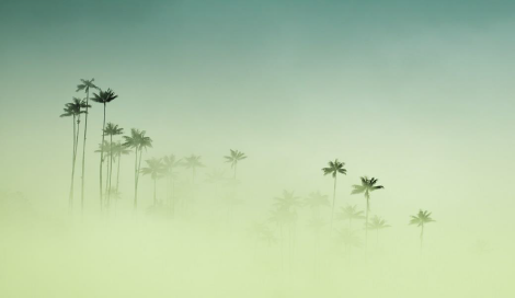 """Rising From the Mist, 16"""" x 24"""", print on aluminum"""