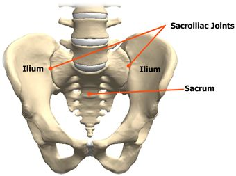 This shows the sacroiliac joints which are located between your spine and hip bones. the pubic symphysis, which is not labelled in the picture above is also a joint that can cause a lot of pain, esp during pregnancy.