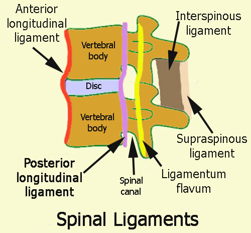 opll-spinal-ligaments-schematic-w-text.jpg