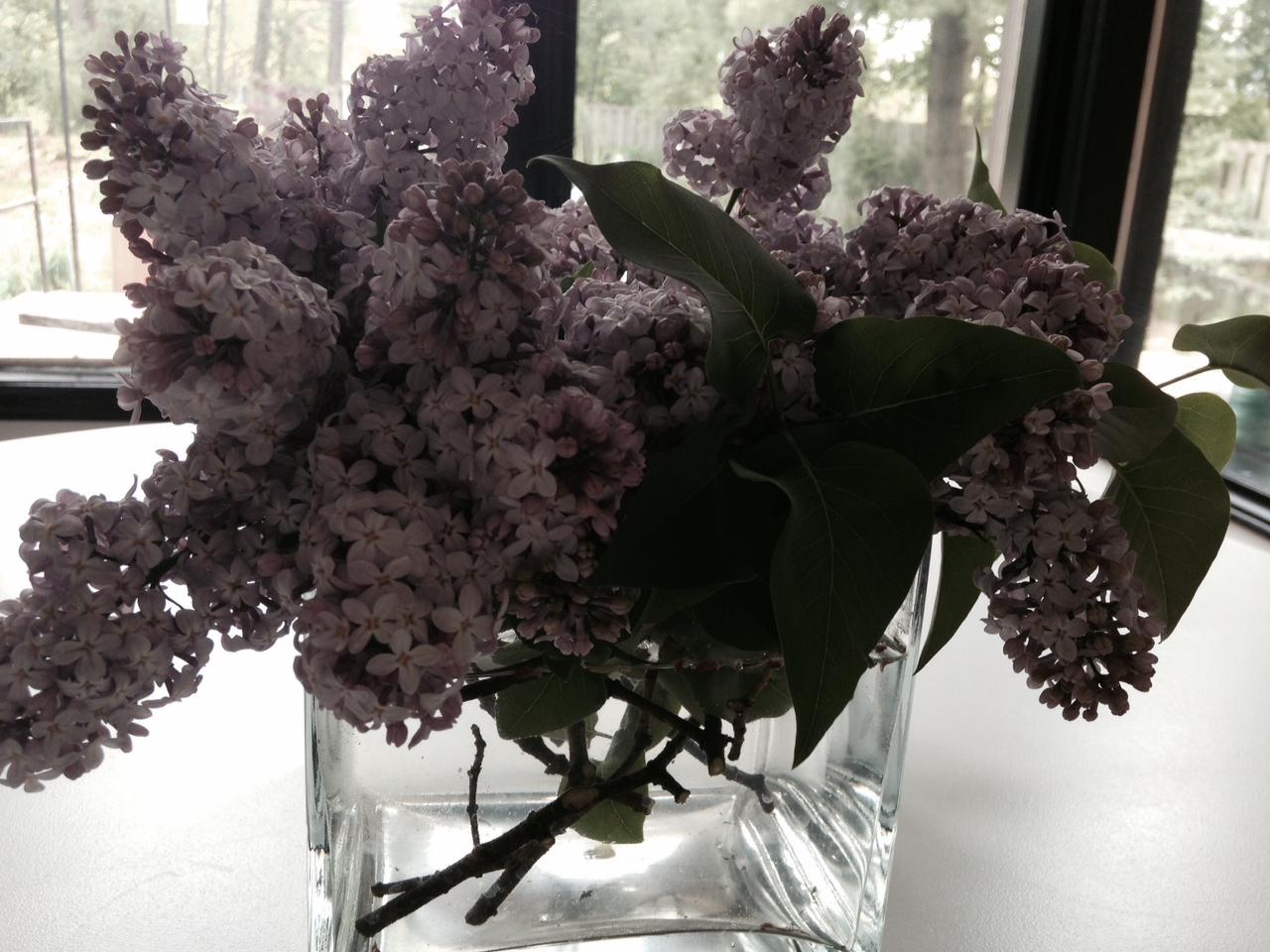 lilac 4