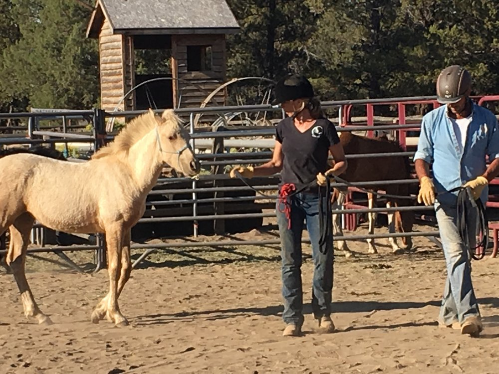 "Leading lesson for 5-month old Warm Springs American Heritage foal ""Topaz"".  Sarah partnering with Certified ROTH Trainer Gino Pommerenke of Germany. Sisters, Oregon, 2016."