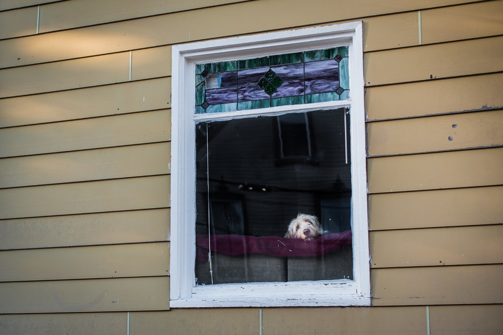 Just another bored dog in Portland.