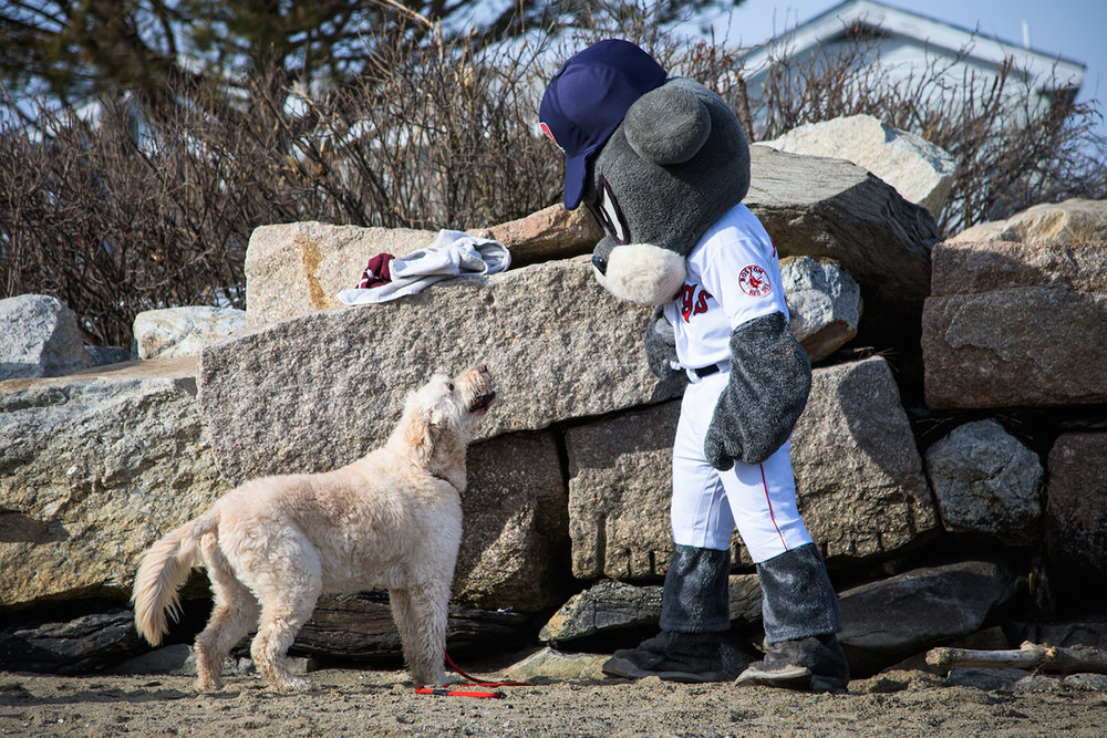 "Portland Sea Dogs mascot Slugger faces off with a friend at Portland's East End Beach Saturday, January 30, 2016 at the Camp Sunshine ""Freezin' for a Reason"" polar plunge."