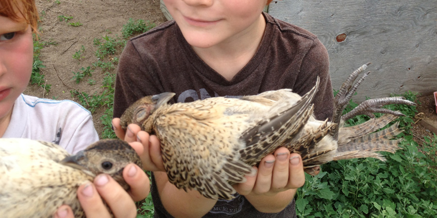 "Kids ""hypnotizing"" the pheasants."
